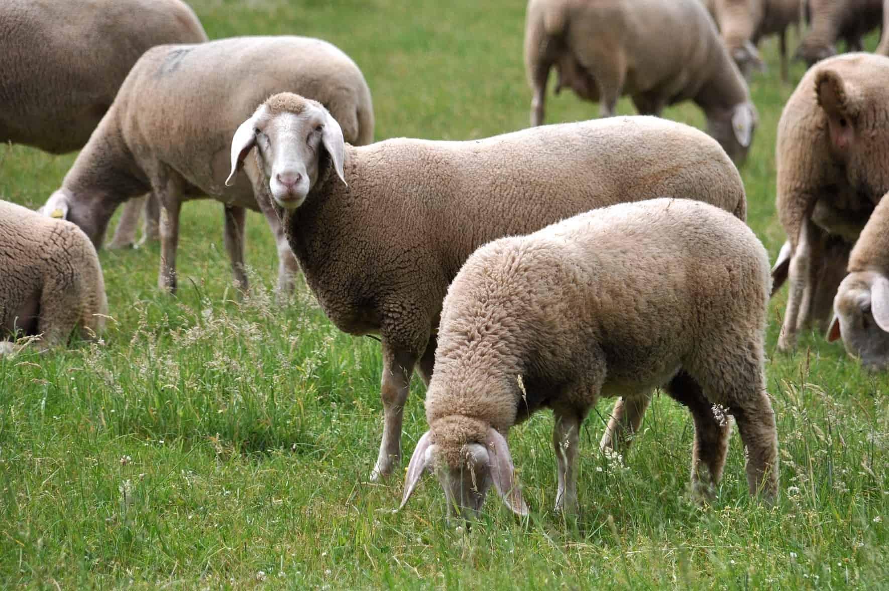 benefits of merino wool clothing